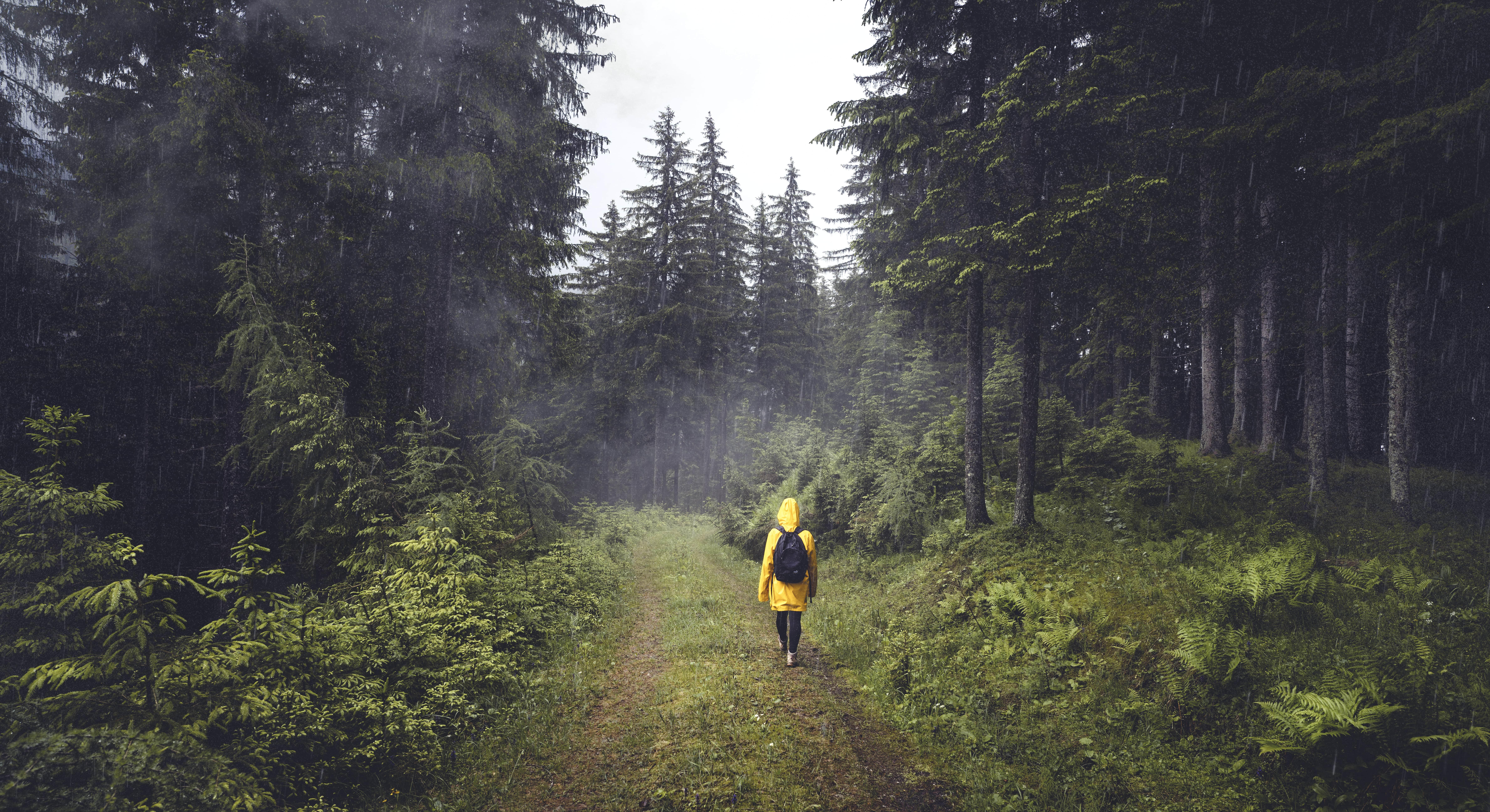 007_Nationalparks_Austria_Gesäuse©Stefan_Leitner-min
