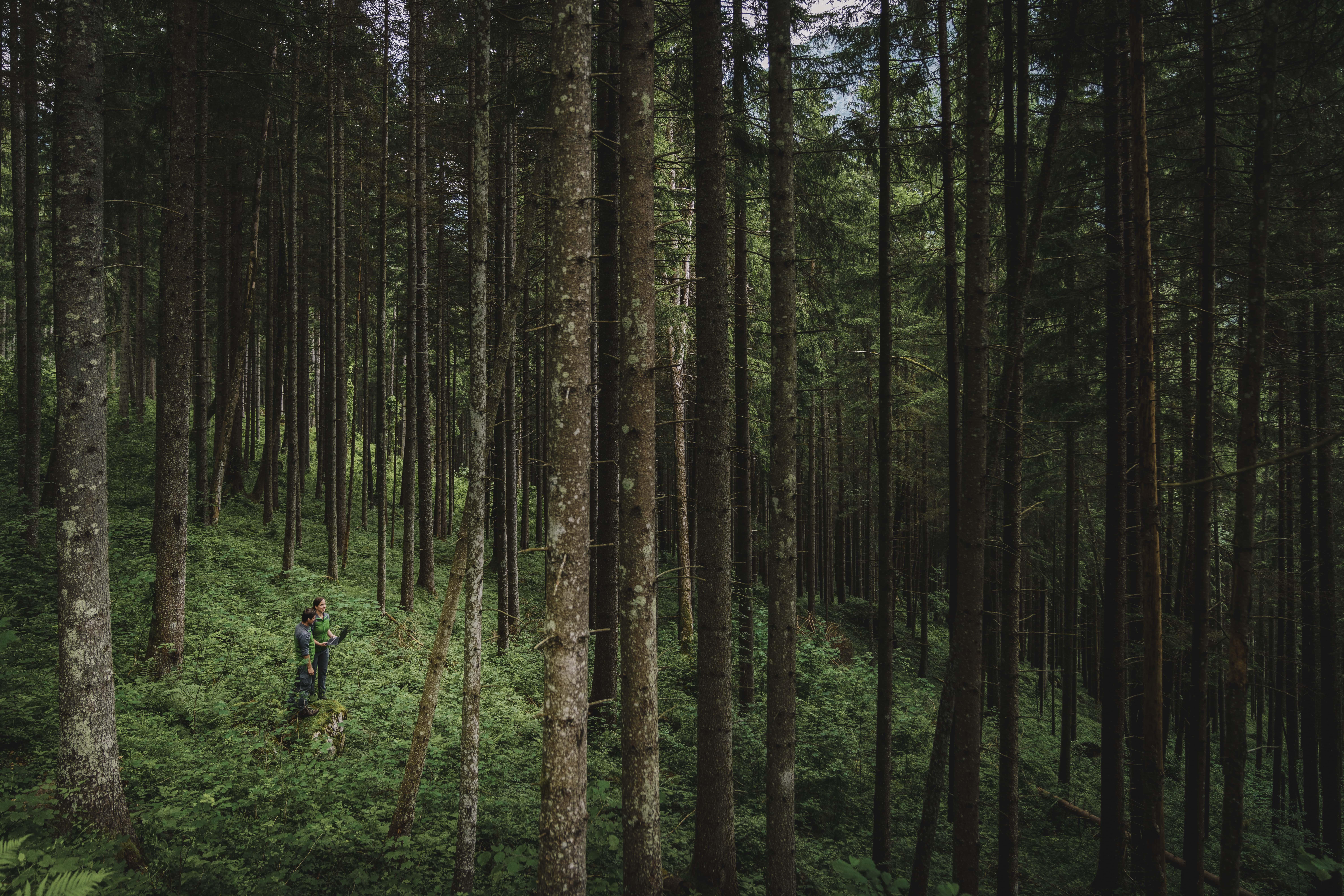 036_Nationalpark_Gesäuse_Naturschutz_Ranger©StefanLeitner_NPG-min