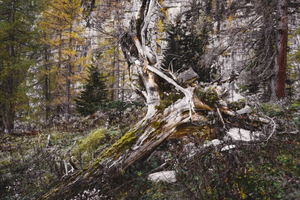 073_Nationalpark_Gesäuse_2019©StefanLeitner