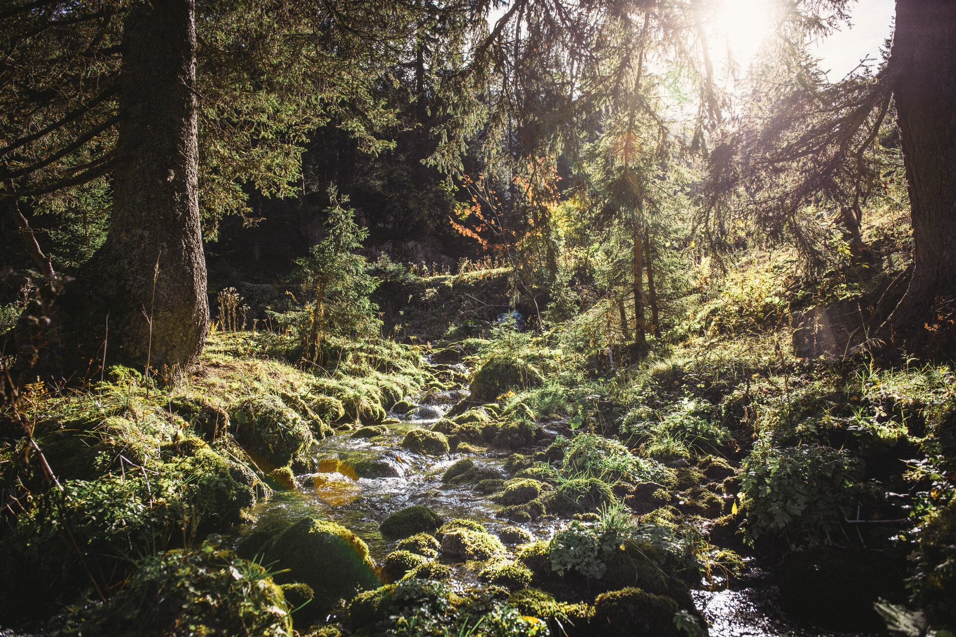 172_Nationalpark_Gesäuse_2019©StefanLeitner