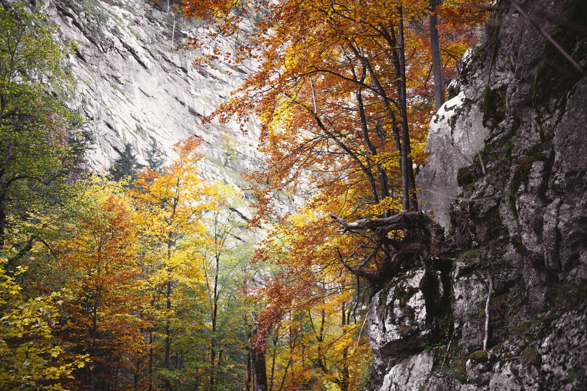 194_Nationalpark_Gesäuse_2019©StefanLeitner