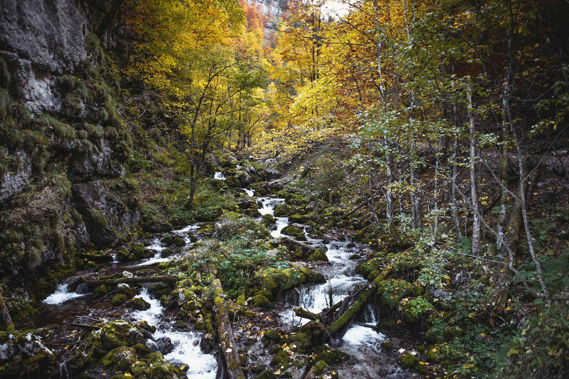 200_Nationalpark_Gesäuse_2019©StefanLeitner (3)