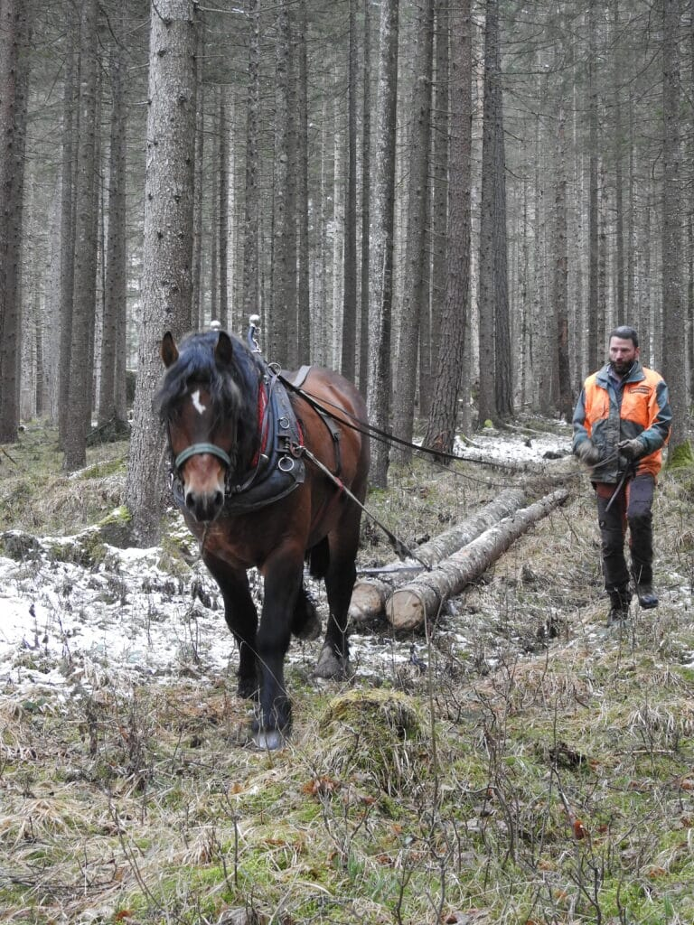 2021_03_16_Pferderueckung_im_Nationalpark_Gesaeuse_c_Christian_Mayer