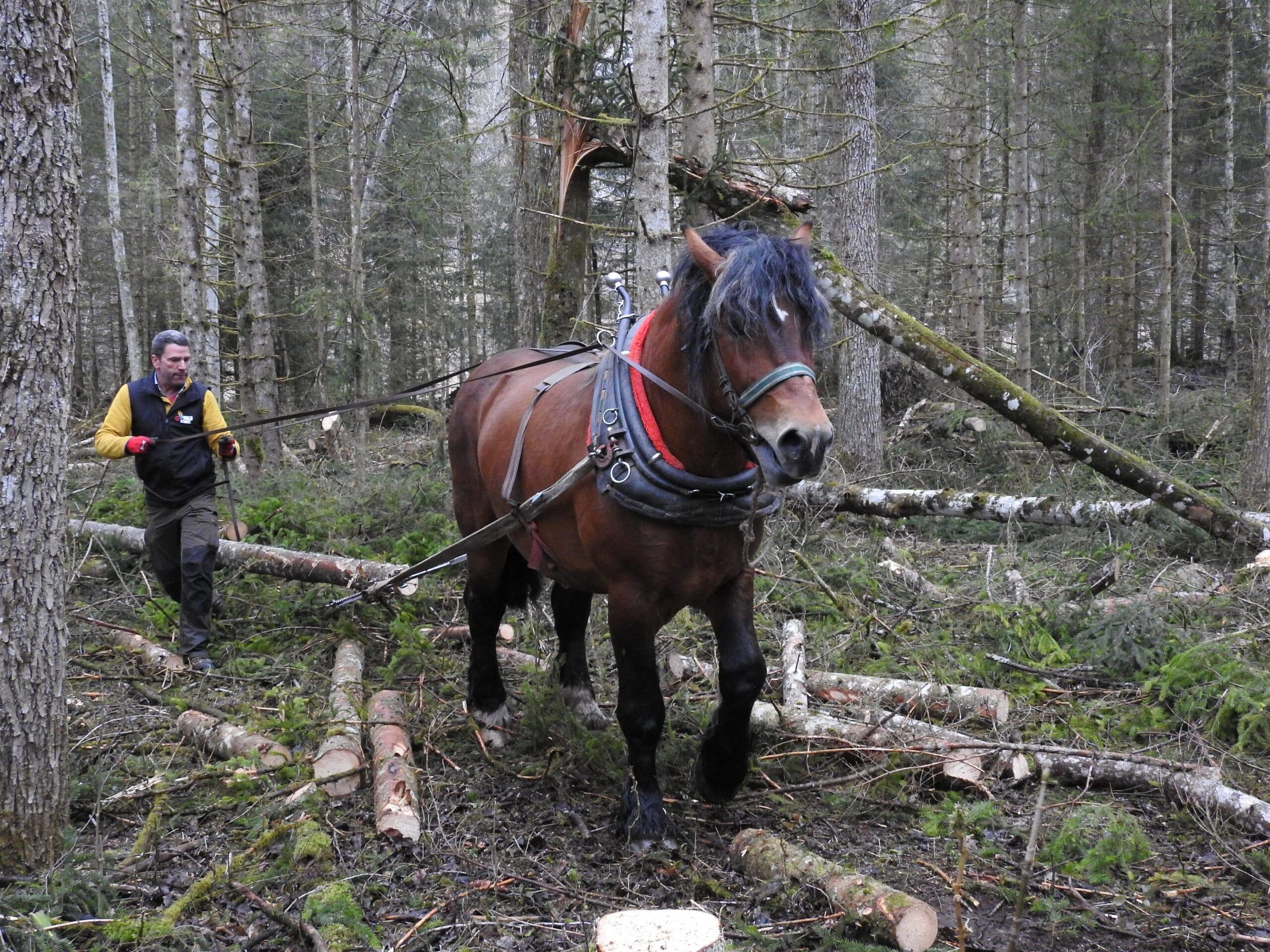 2021_03_16_Pferderueckung_im_Nationalpark_Gesaeuse_c_Christian_Mayer_1