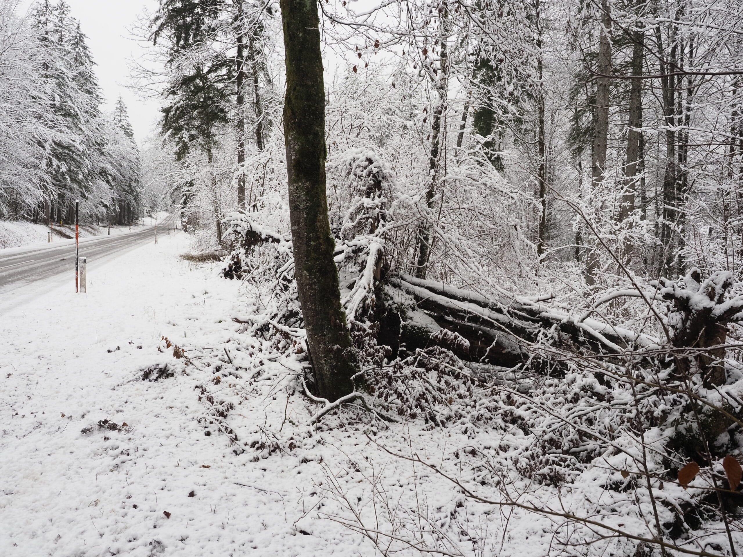 Waldwildnis Bild 1