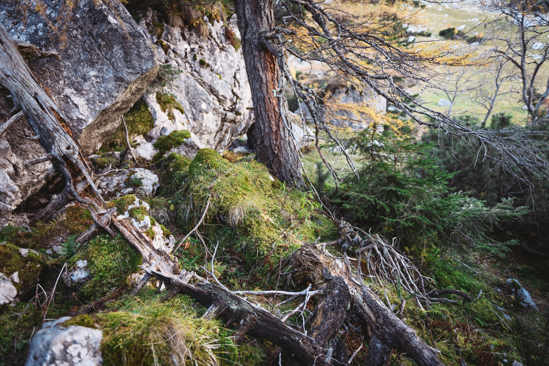 Nationalpark Gesäuse 2019_c-Stefan Leitner_Gesaeuse_186